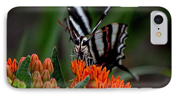 Butterfly Weed IPhone Case