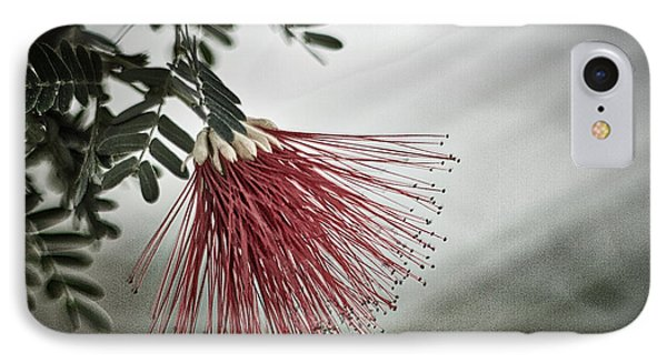 Calliandra Californica IPhone Case