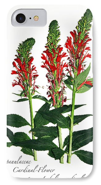 Cardinal-flower IPhone Case