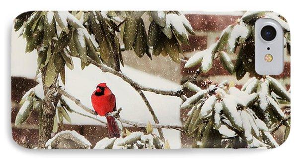 Cardinal In Snow IPhone Case