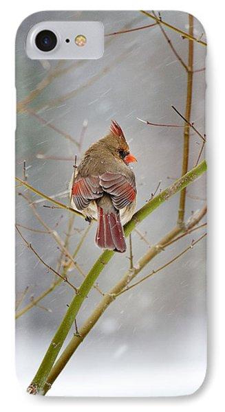 Cardinal On Maple Tree IPhone Case