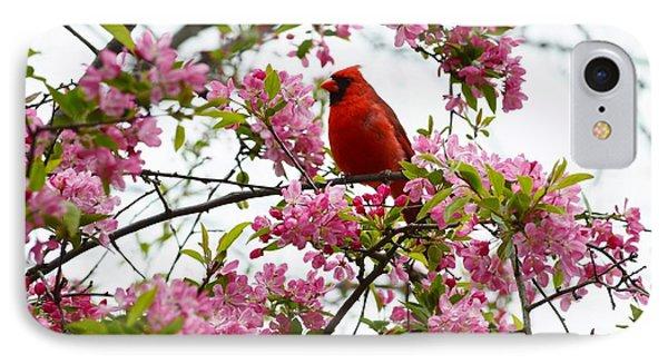 Cardinally Beautiful IPhone Case