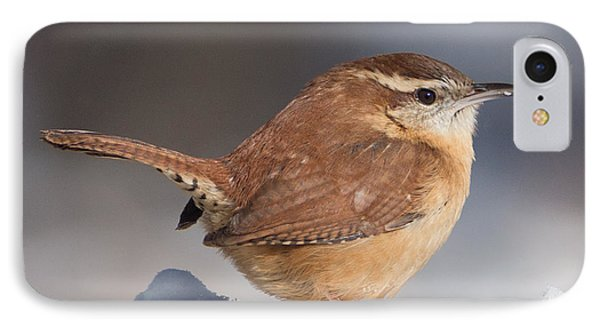 Carolina Wren In Snow IPhone Case