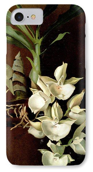 Catasetum Bungerothii, Sander, F. Frederick IPhone Case
