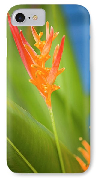 Belize iPhone 8 Case - Central America, Belize, Placencia by John and Lisa Merrill