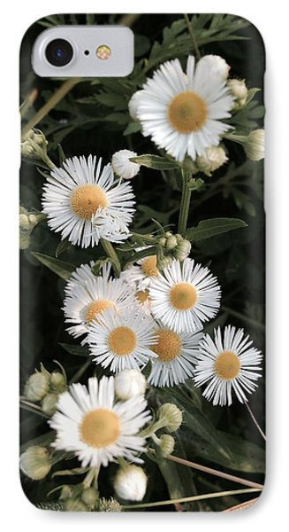 Chamomile Flowers. IPhone Case