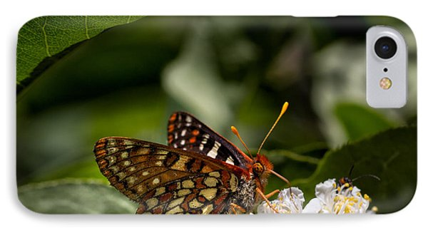 Checkerspot Sipping Nectar IPhone Case