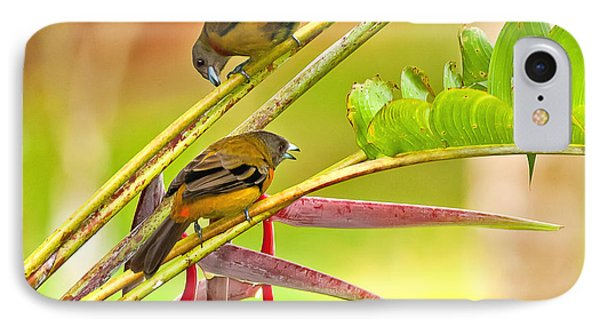 Cherrie's Tanagers IPhone Case