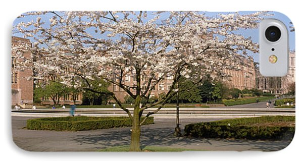 Cherry Blossom Trees In A University IPhone Case