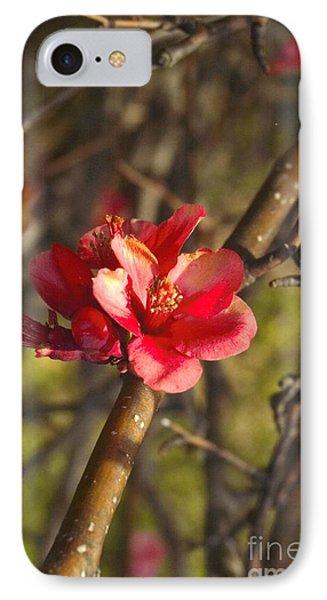 Cherry Blossoom Tree IPhone Case