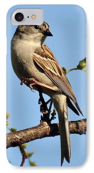 Chipping Sparrow 246 IPhone Case