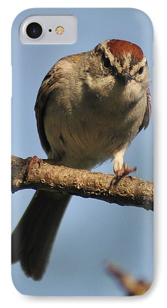 Chipping Sparrow 265 IPhone Case