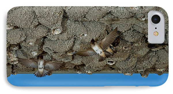Cliff Swallows At Nests IPhone Case