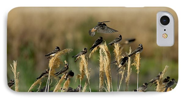 Cliff Swallows Perched On Grasses IPhone Case