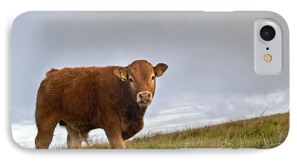 Cliffs Of Moher Brown Cow IPhone Case