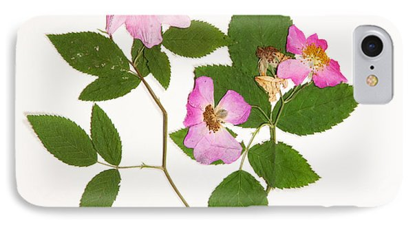 Climbing Prairie Rose  IPhone Case