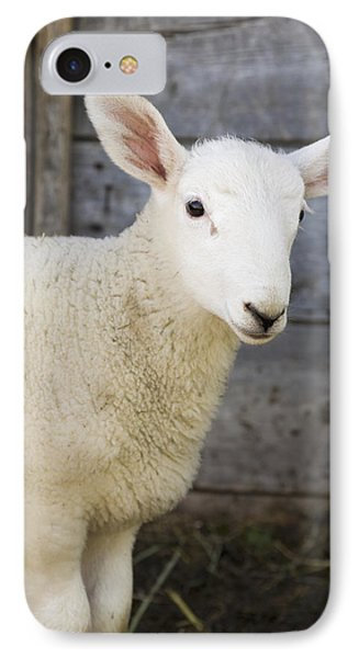Sheep iPhone 8 Case - Close Up Of A Baby Lamb by Michael Interisano