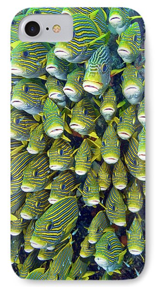 Close-up Of Schooling Sweetlip Fish IPhone Case