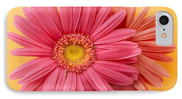 Close Up Of Two Pink Zinnias On Yellow IPhone Case