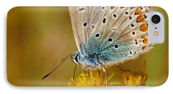 Closeup Of A Common Blue Butterfly IPhone Case