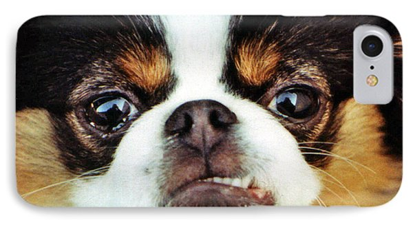 Closeup Of A Japanese Chin Dog IPhone Case