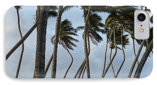 Belize iPhone 8 Case - Coconut Palm (cocos Nucifera by Pete Oxford