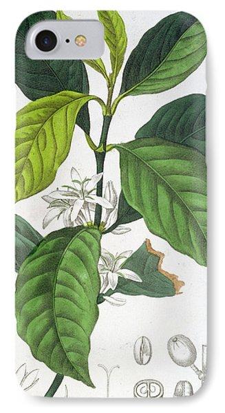 Coffea Arabica IPhone Case