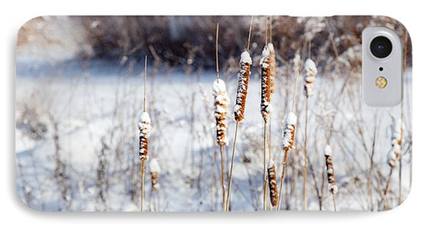 Cold Cattails IPhone Case
