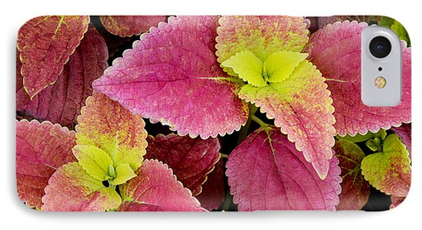 Coleus Colorfulius IPhone Case