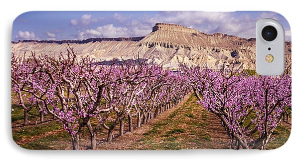 Colorado Orchards In Bloom IPhone Case