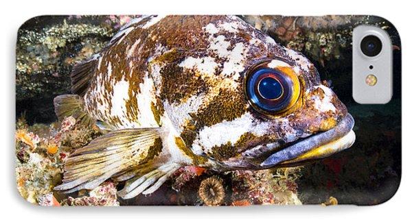 Copper Rockfish IPhone Case
