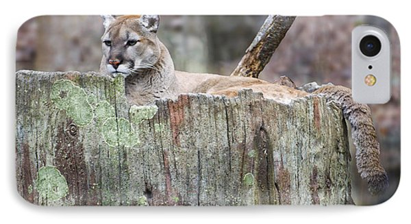 Cougar On A Stump IPhone Case