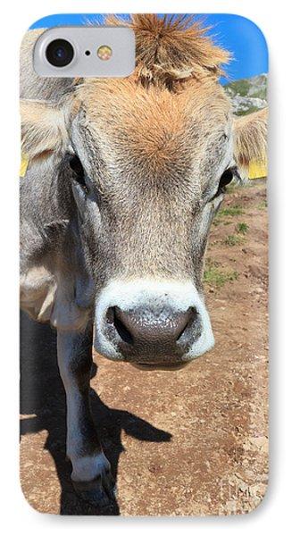 Cow On Alpine Pasture IPhone Case