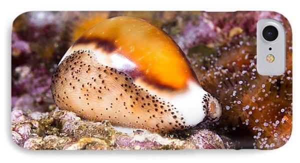 Cowry Snail IPhone Case