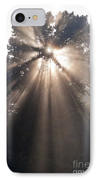 Crepuscular Rays Coming Through Tree In Fog At Sunrise IPhone Case