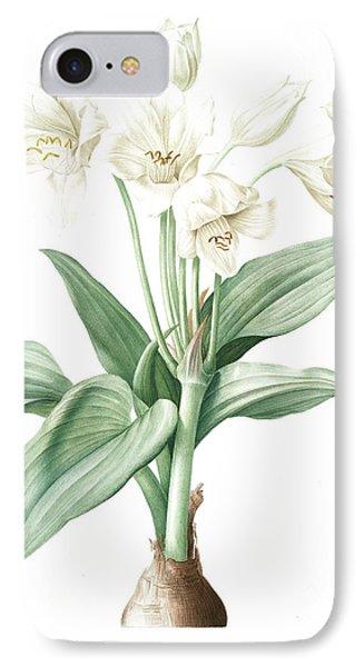 Crinum Giganteum, Crinum Gèant Giant Spider Lily IPhone Case