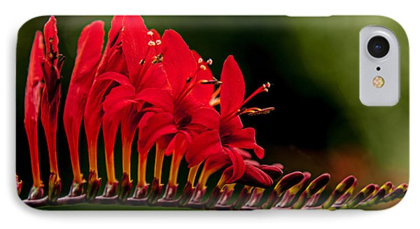 Crocosmia IPhone Case