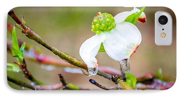 Cruel Winter For A Dogwood Flower IPhone Case