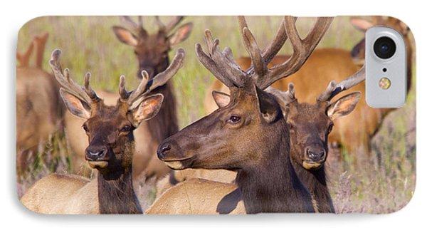 Curious Bull Elk IPhone Case