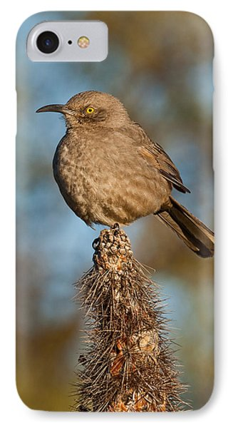 Curve-billed Thrasher On A Cactus IPhone Case