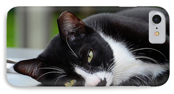 Cute Black And White Tuxedo Cat With Nipped Ear Rests  IPhone Case