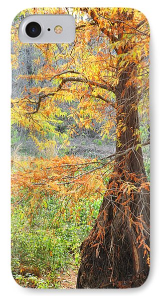 Cypress In Autumn IPhone Case