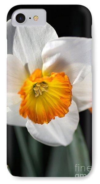 Daffodil In White IPhone Case