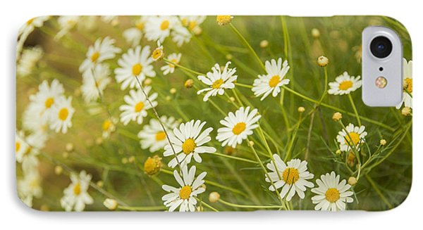 Daisies In A Summer Medow IPhone Case