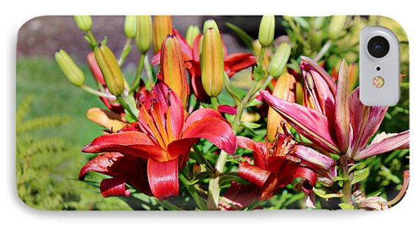Day Lillies In The Garden IPhone Case