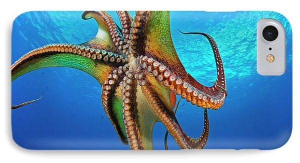 Day Octopus  Octopus Cyanea IPhone Case
