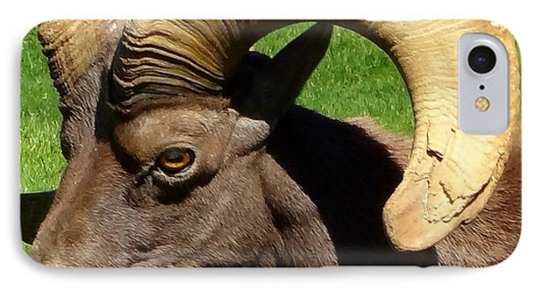 Desert Bighorn Sheep  IPhone Case