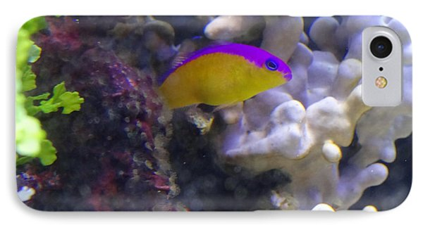 Dottyback After Dinner IPhone Case