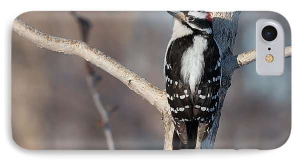 Downey Woodpecker IPhone Case