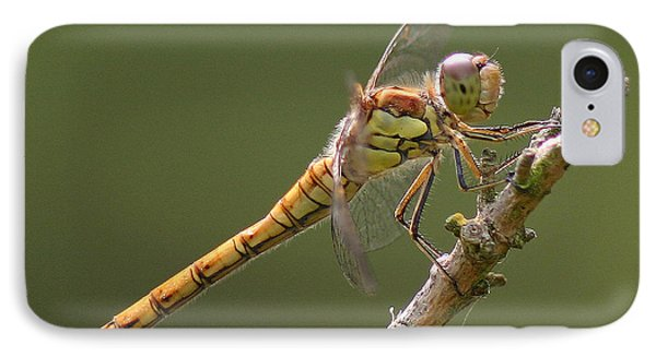 Dragonfly At Rest IPhone Case